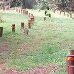 Photo of Karura Forest