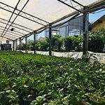 Azienda agricola Carmazzi Photo