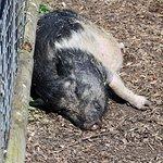 صورة فوتوغرافية لـ Isle of Wight Zoo