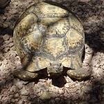 Ronald, die Garten-Schildkröte