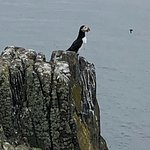 Foto de Scottish Seabird Centre