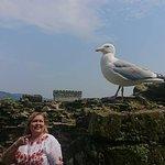 yep -- there be seagulls