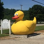 Giant Rubber Duckie Photo