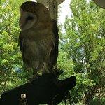 Bild från Teton Raptor Center