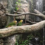 Aviary residents: 52 and 42 year old parrots
