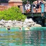 snorkel in predator lagoon