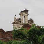 A few of the 120 storks' nests that Alcalá is proud home to.