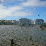 Pond of Reykjavik Official Tourist Information Centre