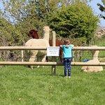 Фотография Abbotsbury Childrens Farm
