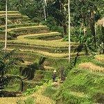 Valokuva: Bali Driver Seminyak - Private Day Tours