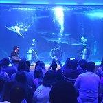 Newport Aquarium Foto