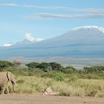 great kilimanjaro view from northern circuit