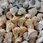 Local shop for shells