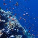 Dive Komodo Foto