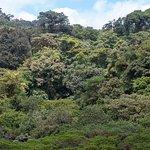 Monteverde Cloud Forest Lodge照片