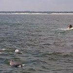 dolphins near jet skiers