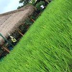 Foto di Pangkon Bali (Rumah Makan & Agrowisata)