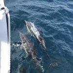 Bild från Dana Wharf Whale Watching & Sportfishing