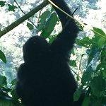 Photo of Gorillas and Wildlife Safaris