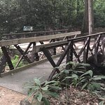 creeks and bridges