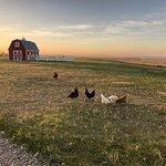 Circle View Guest Ranch Bild
