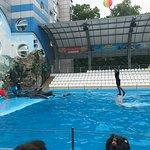 Photo of Kharkov Dolphinarium