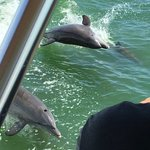 Dolphins putting on a show