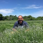Prince Edward County Lavender field attracts bees of all sizes!