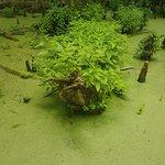 Photo de Greenville Cypress Preserve