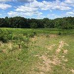 Path through one field