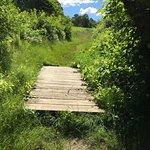 boardwalk on the Loop Trail