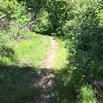 Smaller path on the Loop Trail