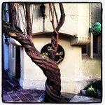 Café Escondido, gran árbol.Barrio Lastarria