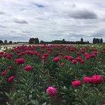 Foto de Adelman Peony Gardens