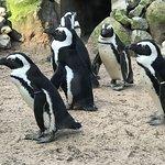 Amersfoort Zoo Photo