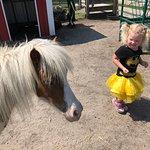 Foto di Dutch Creek Farm Animal Park