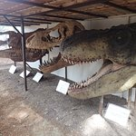 têtes de dinosaure