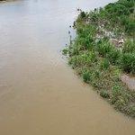 Photo de Bridge Over Rio Tarcoles