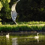 """""""Recovery Wing"""" by Grainger McCoy at Swan Lake and Iris Gardens"""