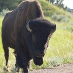Theodore Roosevelt National Park Foto