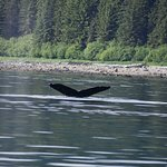 One of the many whales sighted