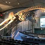 Whaling Museum resmi