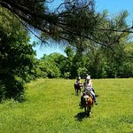 Trot thru open pastures during your ride at First Farm Inn.