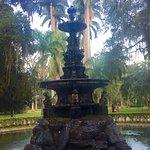Фотография Botanical Garden (Jardim Botanico)