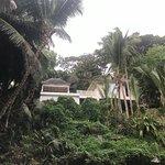 Foto de Banyan Tree