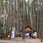 صورة فوتوغرافية لـ Imogiri Pine Forest