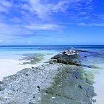 Mouettes australiennes à l'îlot MbéKouen ( Sea birds at Mbékouen)