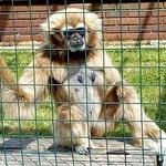 Monkey Haven Photo