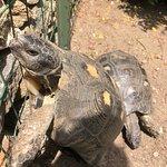 Le tartarughe 🐢