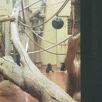 Φωτογραφία: Budapest Zoo & Botanical Garden